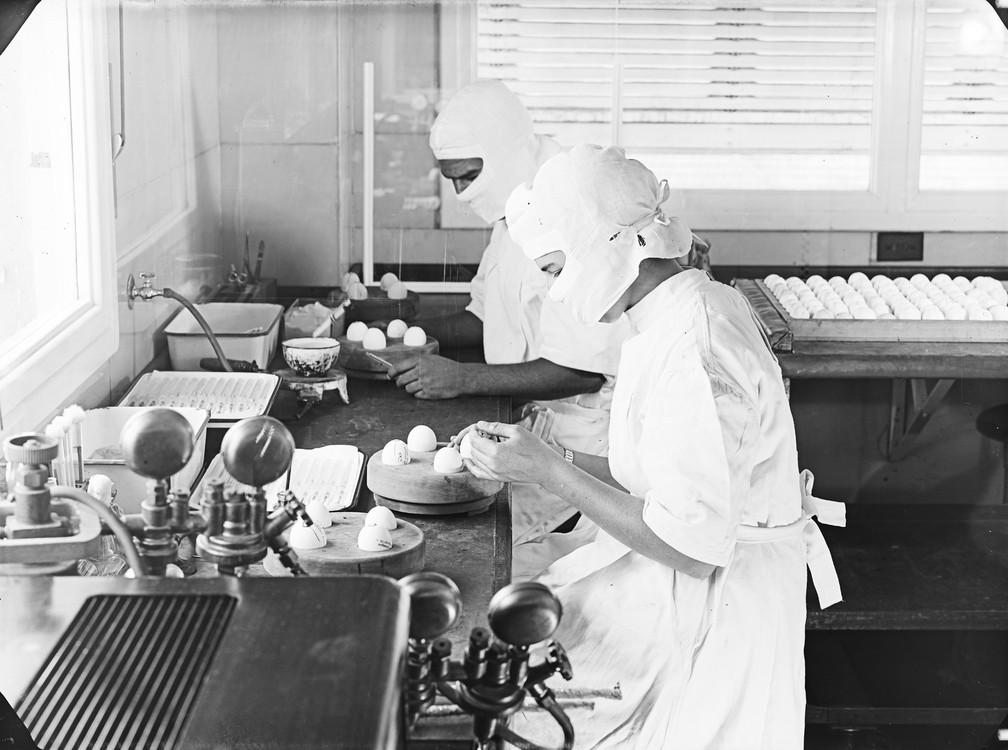 Imagens da produção da vacina contra febre amarela na primeira metade do século XX ; ovos fecundados são usados ainda hoje no processo de fabricação de imunizantes (Foto: Acervo Casa de Oswaldo Cruz/Fiocruz)