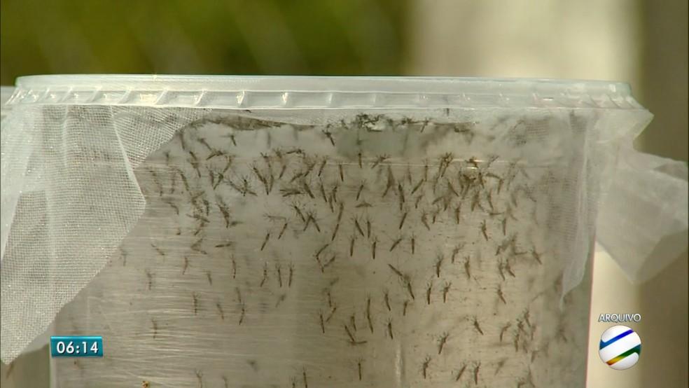 -  Município de MS vive surto da febre chikungunya, afirma saúde  Foto: TV Morena/Reprodução