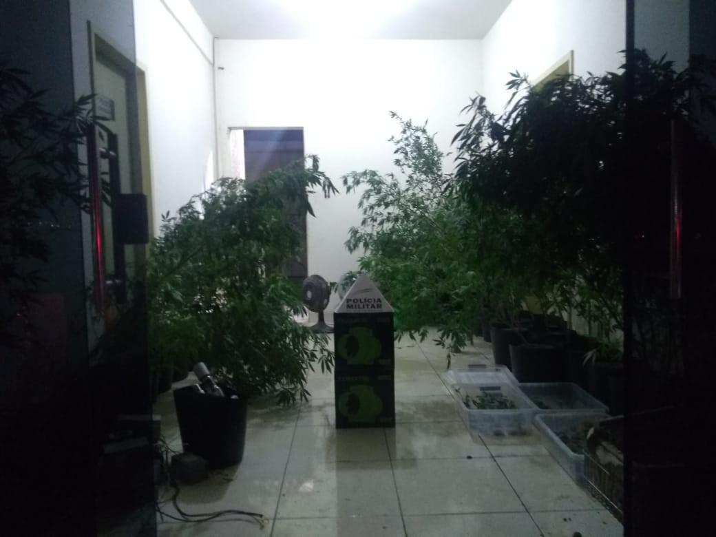 PM acha estufa com 112 vasos de maconha em MG; local tinha ar-condicionado e luminárias - Notícias - Plantão Diário