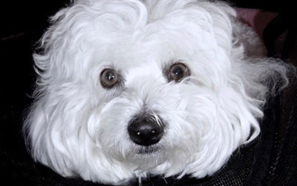 A cachorrinha Samantha, que morreu em 2017, teve células coletadas e usadas para produzir clones (Foto: Reprodução/Instagram/Barbra Streisand)