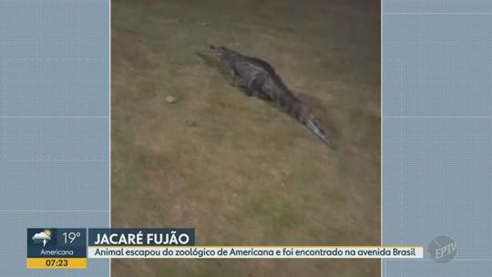 Prefeitura de Americana faz buscas por Jacaré que escapou do Parque Ecológico