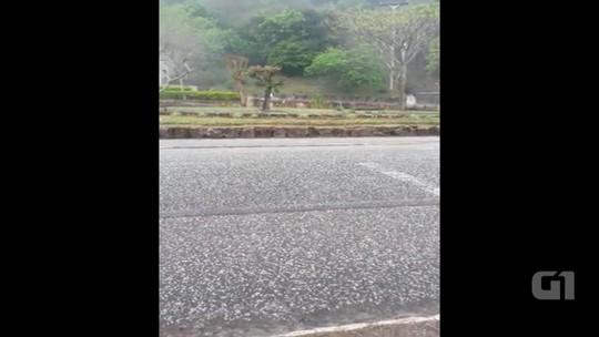 Granizo cobre de branco ruas e campos de Santa Maria do Herval, RS