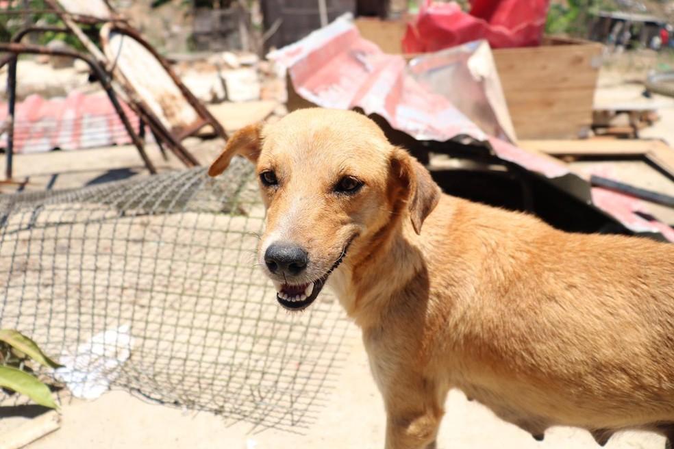 29 cães e gatos foram resgatados da invasão Monte Horebe em Manaus. — Foto: Fábio Romão e Matheus Ponce