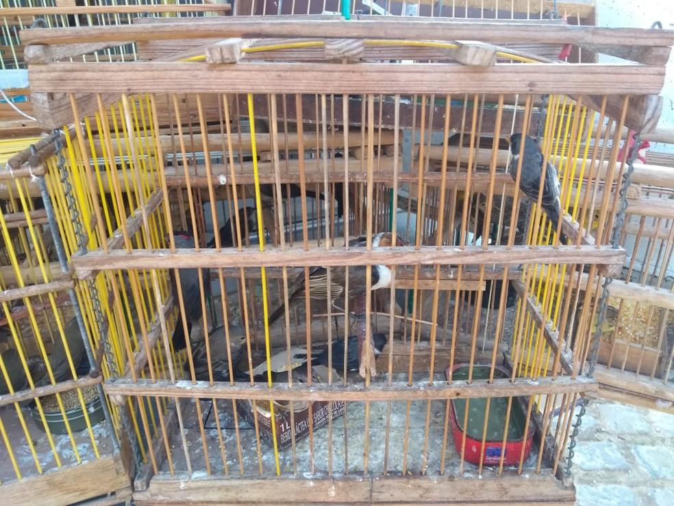 Aves silvestres foram apreendidas com um homem de 43 anos na feira de pássaros de Afogados da Ingazeira — Foto: Polícia Militar/Divulgação