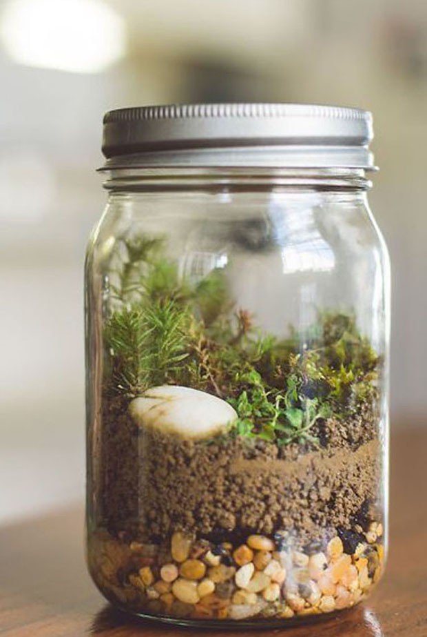 Potes de vidro: Terrário (Foto: Pinterest/Reprodução)