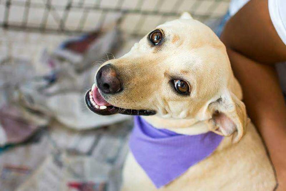 Lei aprovada pela AL prevê esterilização de cães e gatos recolhidos pelo poder público e destinação para adoção (Foto: Divulgação)
