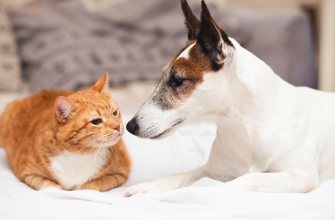 Normas são aprovadas para controle populacional de cães e gatos em Itaúna