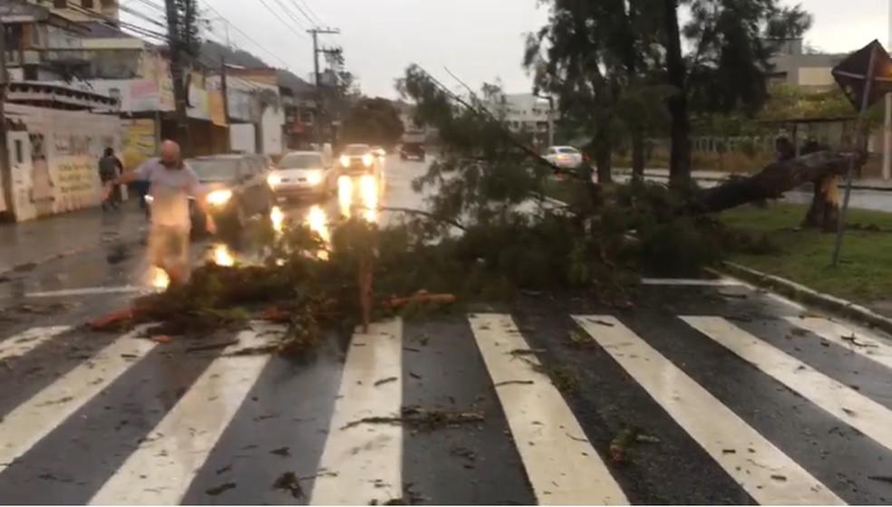 Queda de árvore perto da UFSC, em Florianópolis — Foto: Guarda Municipal de Florianópolis