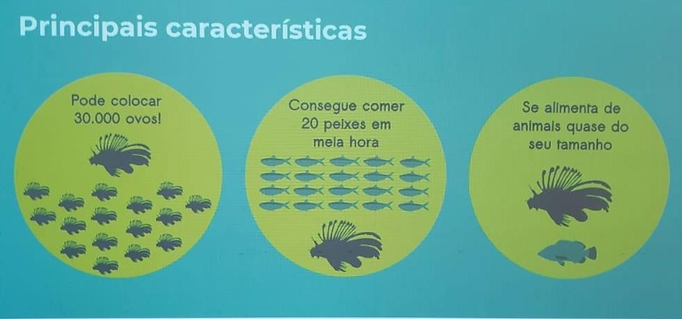 Informações do peixe-leão repassadas no treinamento do ICMBio — Foto: Ana Clara Marinho/TV Globo