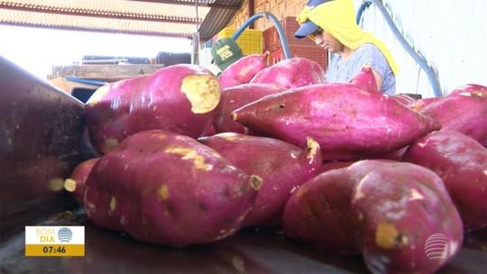 Concurso #Receitando abre inscrições no Oeste Paulista para receitas à base de batata-doce