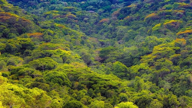 costa-verde-paraty-mata-atlantica-sustentabilidade-preservação-ambiental (Foto: Henrique Ferreira/CCommons)