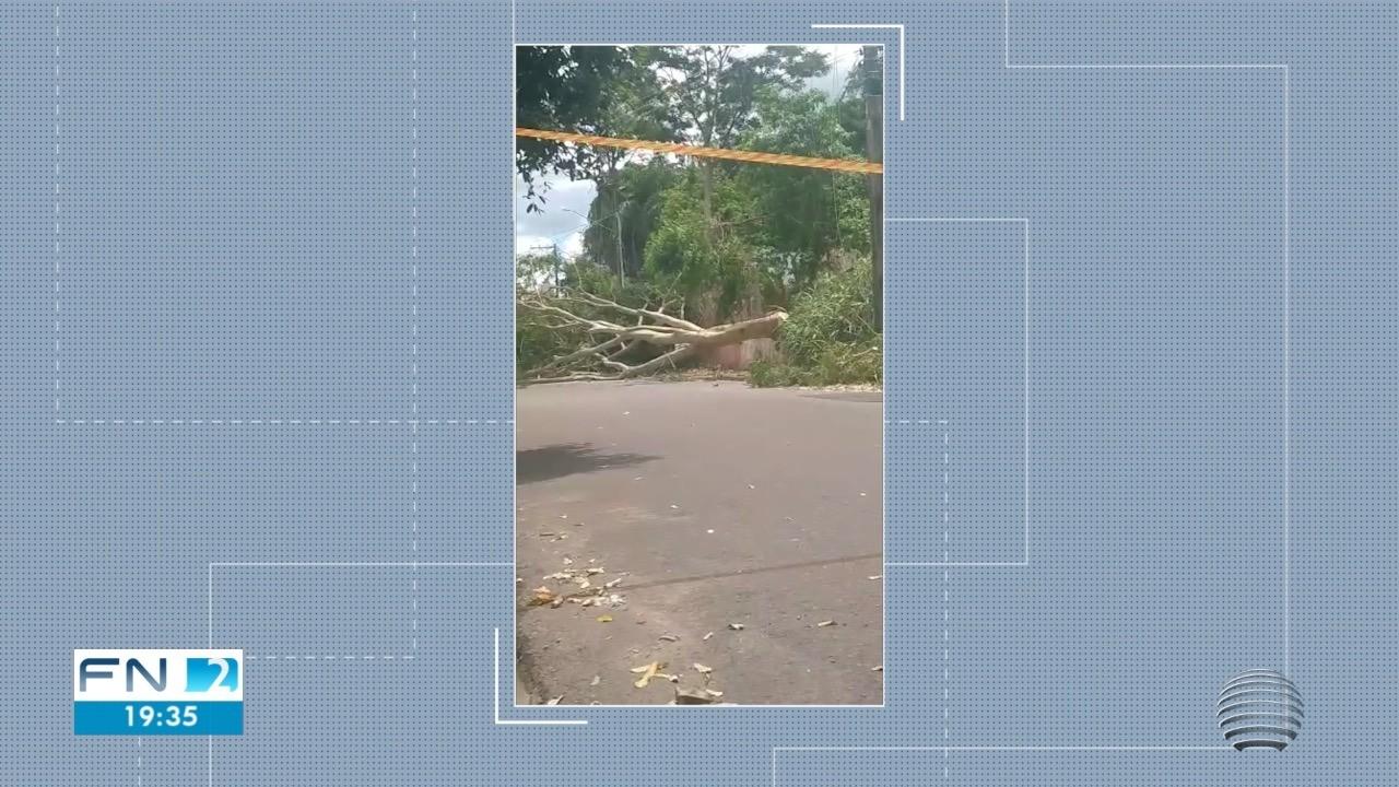 Queda de árvore deixa moradores do Jardim Itapura 1 sem energia
