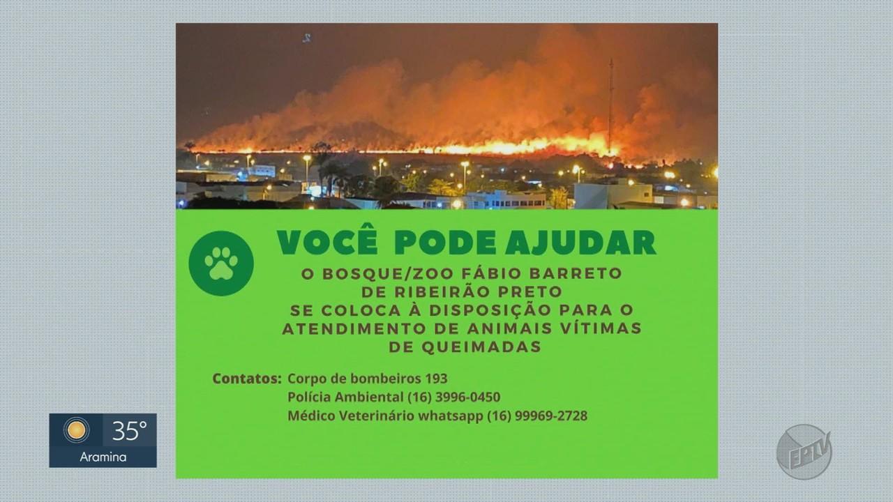 Bosque resgata 57 animais silvestres que sobreviveram ao fogo em Ribeirão Preto