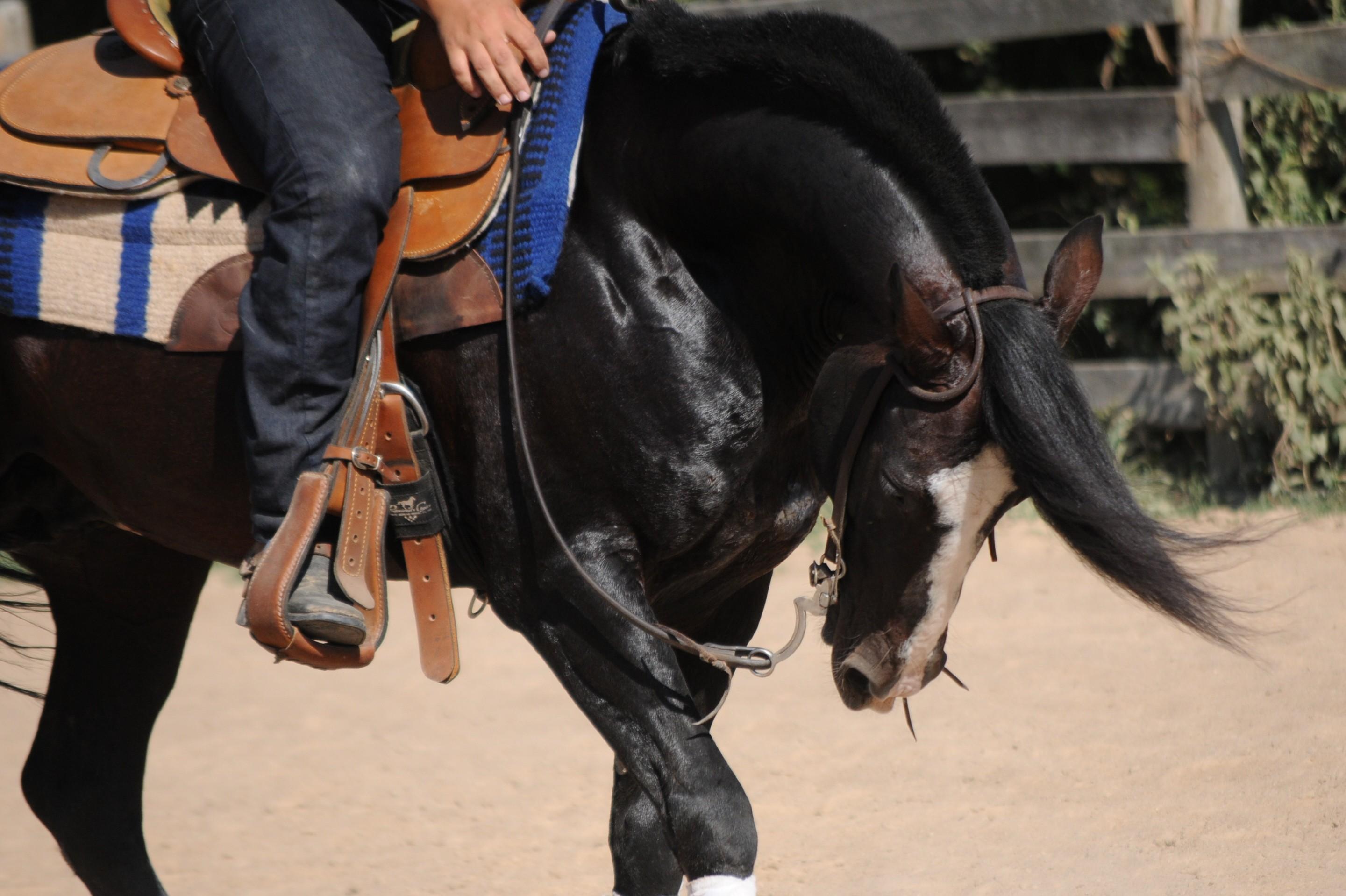 cavalo_itapororo (Foto: Faby Mattos/ ABCCC)