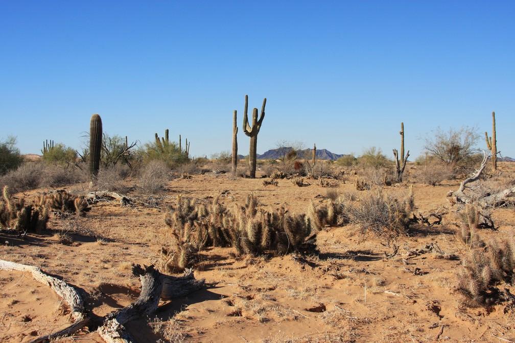 Refúgio natural de Cabeza Prieta, no Arizona — Foto: Andrew Loescher/USFWS