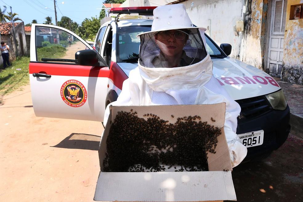 Corpo de Bombeiros realiza captura de insetos no RN  — Foto: CBMRN/ASSECOM/RN