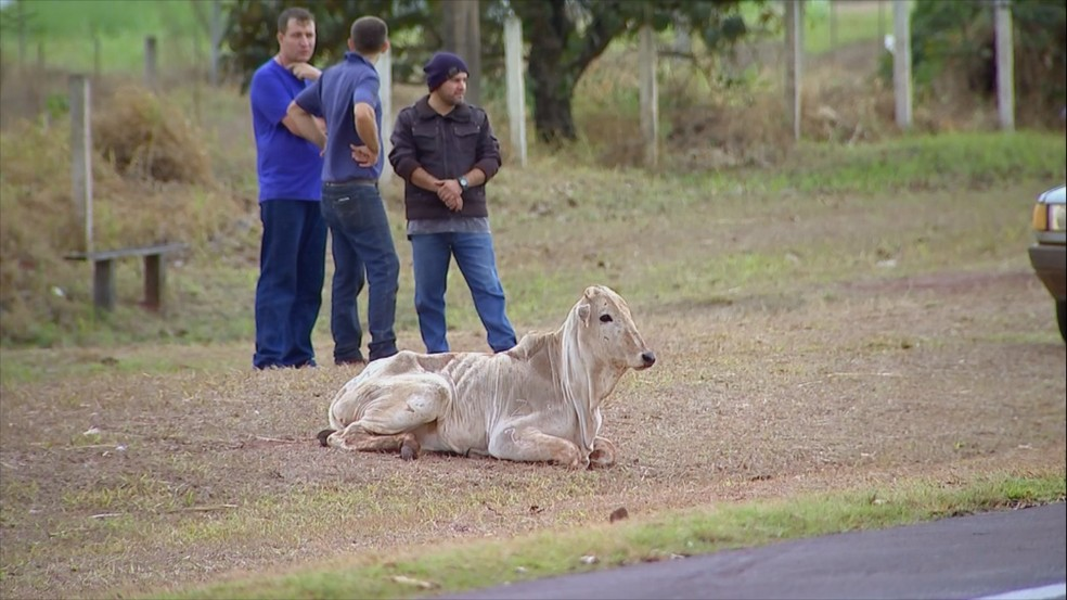 Dois animais morreram após o acidente (Foto: Reprodução/TV TEM)