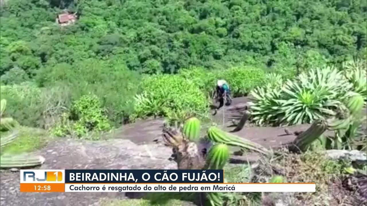Cachorro é resgatado de rapel por moradores em Maricá