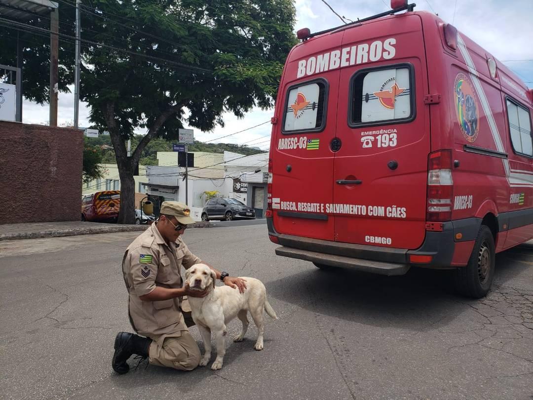 Cães farejadores e militares do Corpo de Bombeiros de Goiás chegaram nesta madrugada para auxiliar nas buscas em Brumadinho, MG