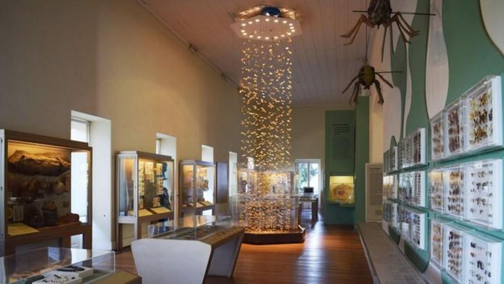 Andar onde ficavam insetos e outros animais invertebrados no Museu desabou; acervo pode ter sido completamente destruído (Foto: Museu Nacional/UFRJ/Divulgação)