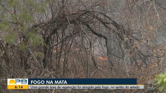 Bombeiros fazem força tarefa para apagar incêndio que dura 13 dias em mata no Sertão da PB