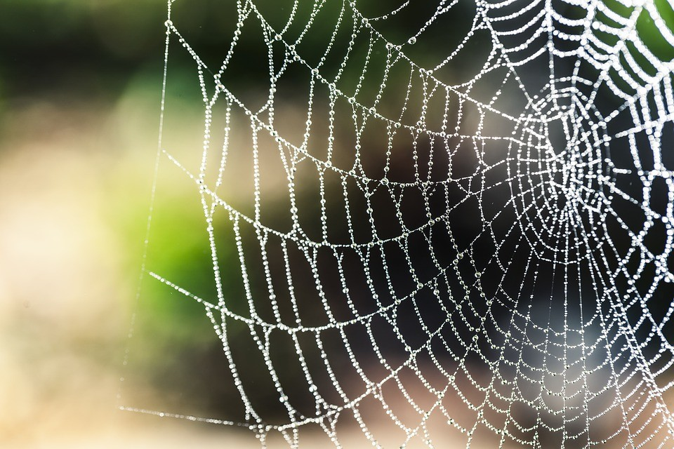 Teia de aranha é a fibra natural mais forte conhecida no mundo (Foto: Pixabay/Brenkee/Creative Commons)
