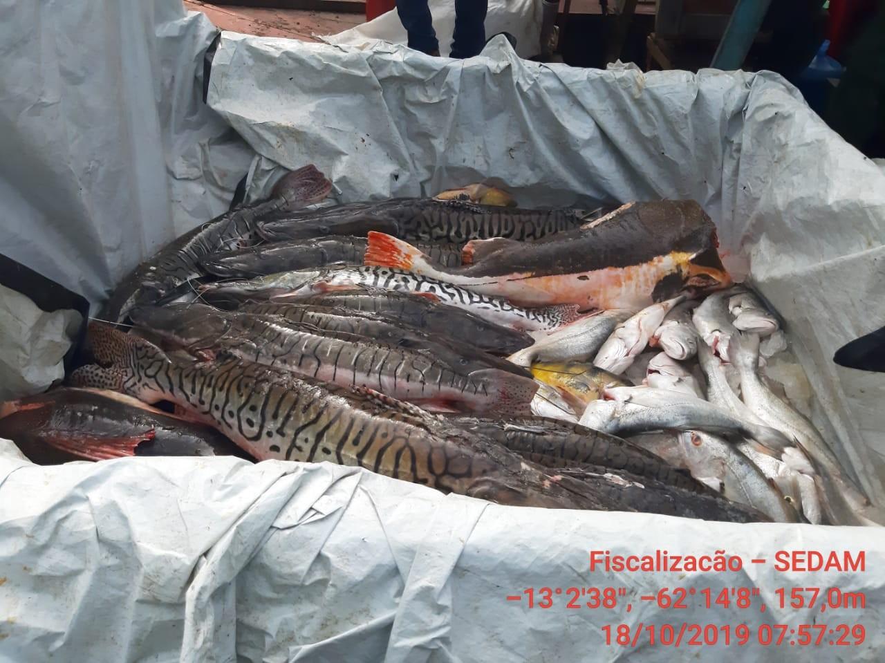 Quase 700 kg de peixes são apreendidos pela Polícia Ambiental em RO - Notícias - Plantão Diário