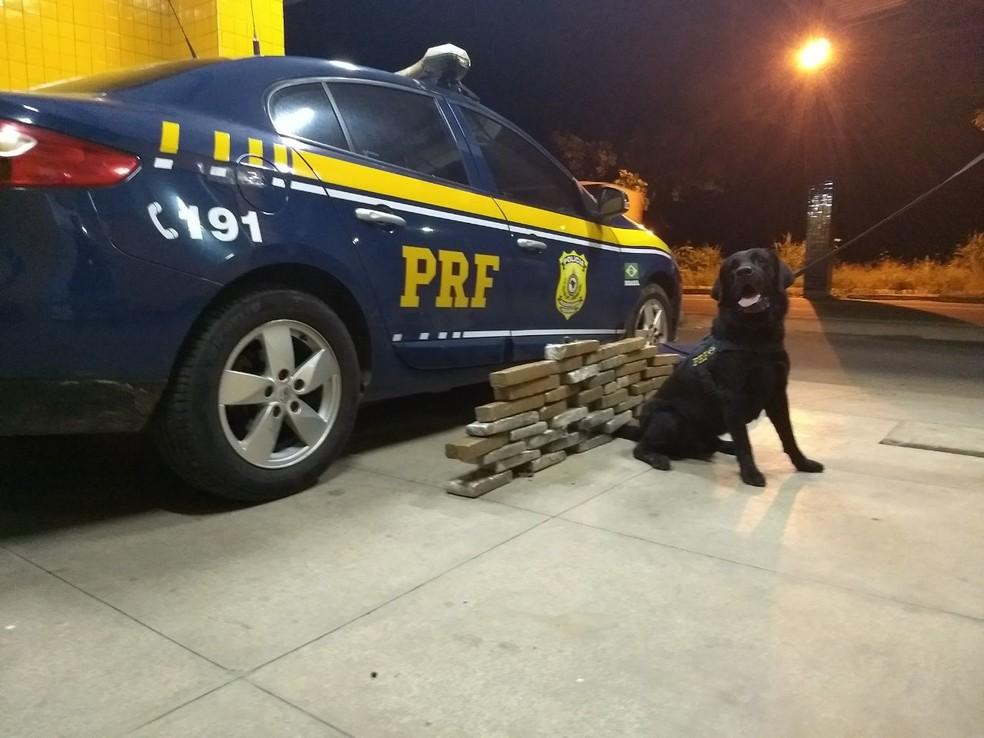 Cão farejador da PRF encontrou mala com 26 kg de maconha em Floriano, Sul do Piauí (Foto: Divulgação / PRF)