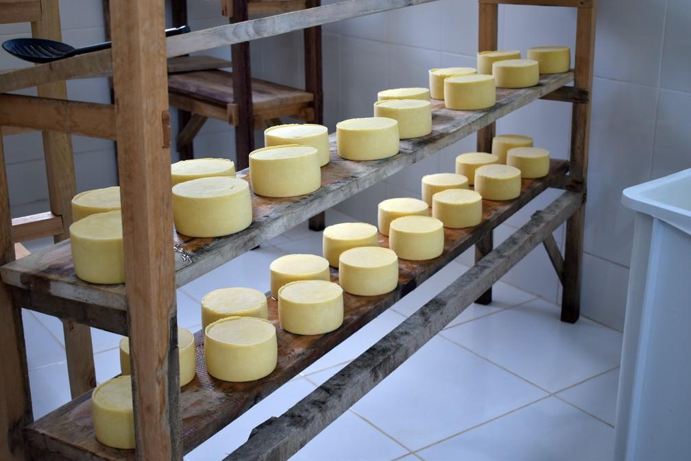 Queijo artesanal meia cura é indicado por nutricionista — Foto: Régis Melo