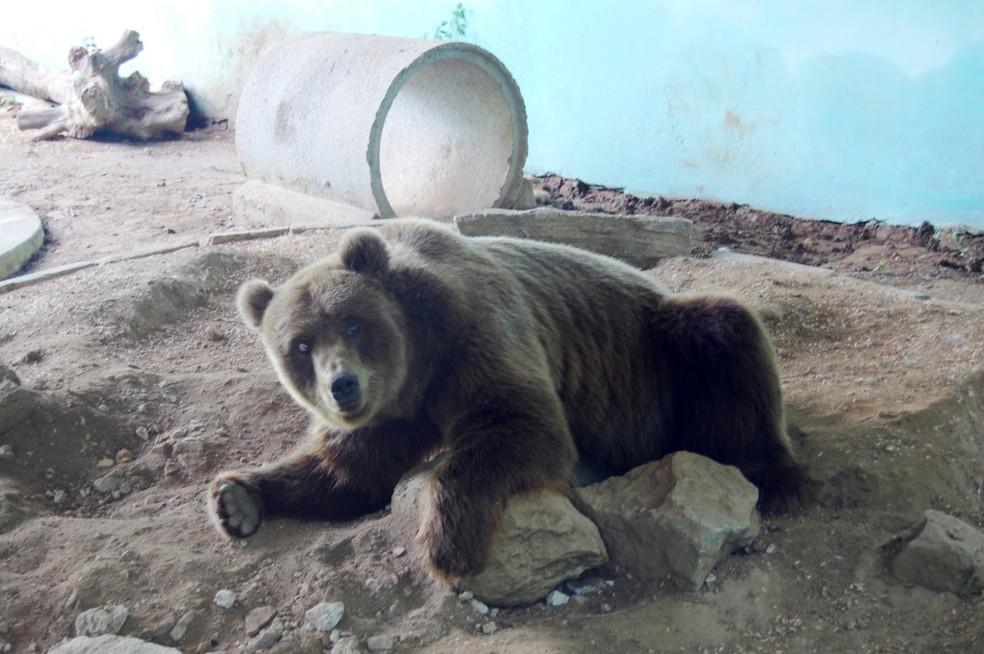 Ursos vivem em local criados para eles desde 2008, quando foram resgatados de circo — Foto: Santuário de São Francisco/Divulgação