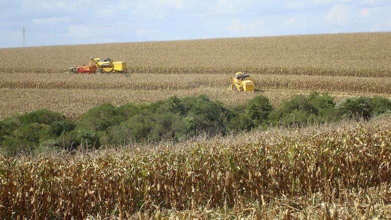 Colheita de milho em Xanxerê (SC) (Foto: REUTERS/Inae Riveras)