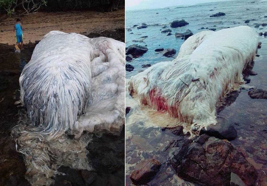 A criatura virou atração em praia filipina