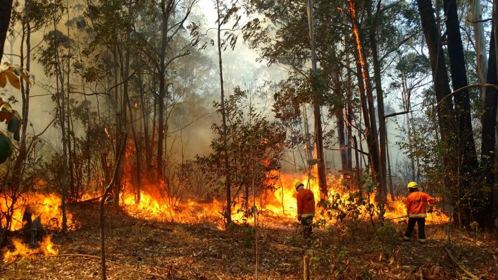 Militares do Corpo de Bombeiros tentam apagar chamas que atingem Floresta Nacional (Foto: CBMDF/Divulgação)