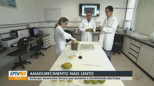 Técnica com cera de carnaúba aumenta a conservação das frutas