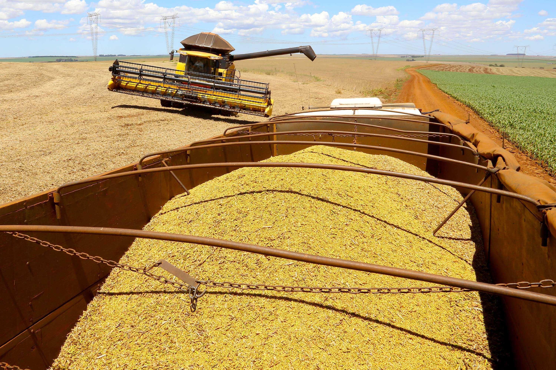 Estiagem reduz estimativa da safra de grãos mesmo com área de plantio maior no Paraná