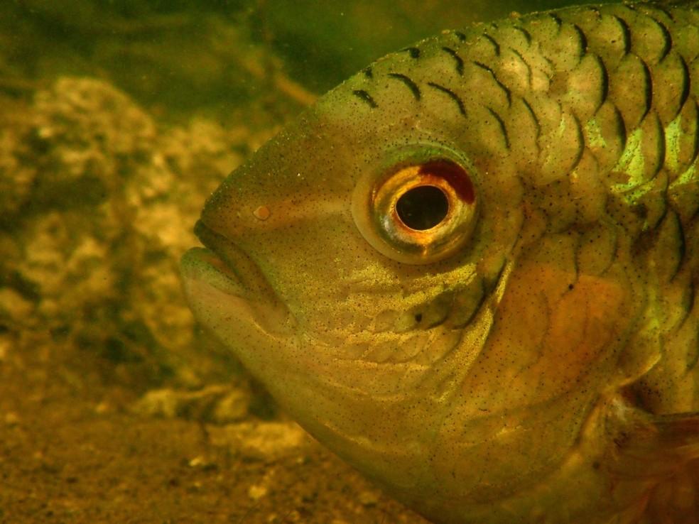 Últimos dados apontam que no Pantanal existem aproximadamente 269 espécies de peixes. — Foto: Tai Strietman/Foto