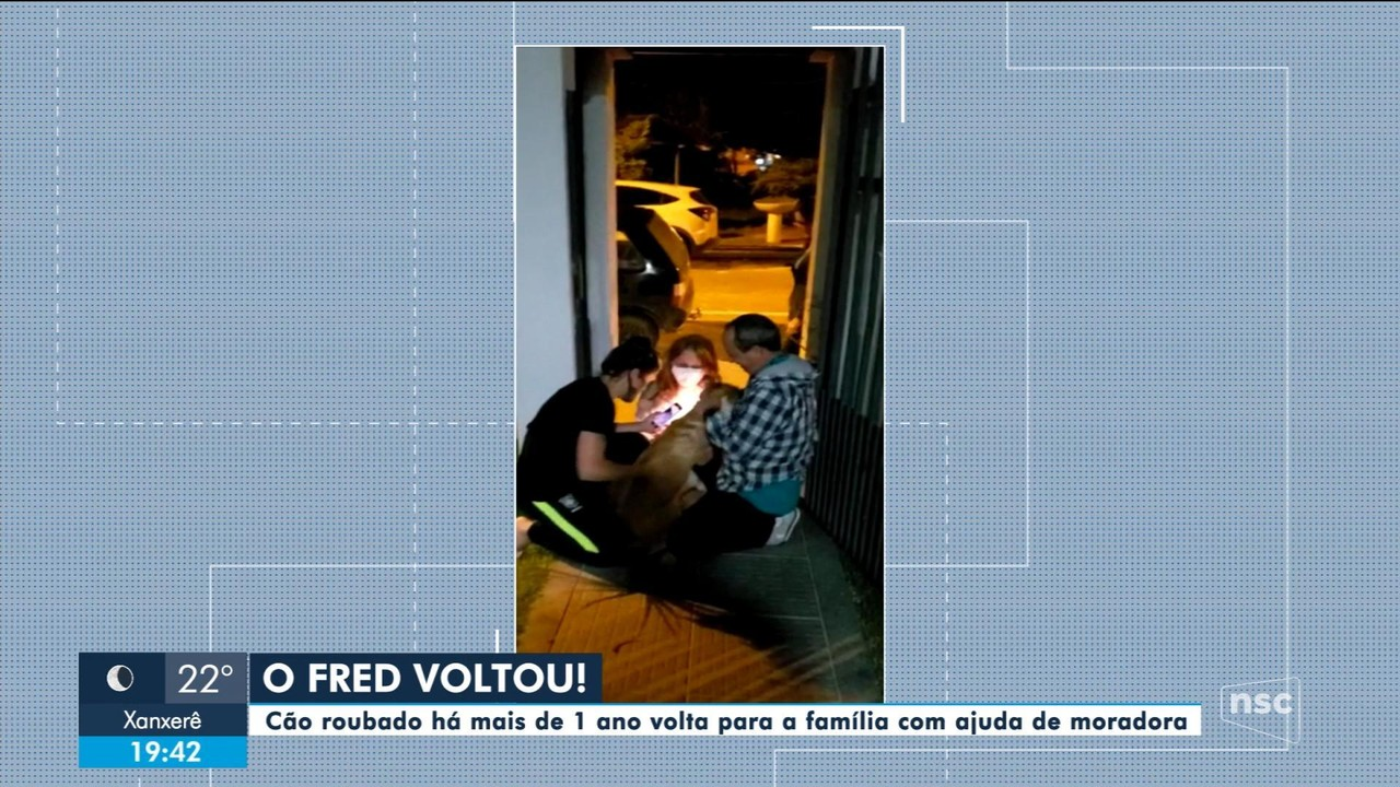 Após divulgação em redes sociais, cão roubado é devolvido aos donos