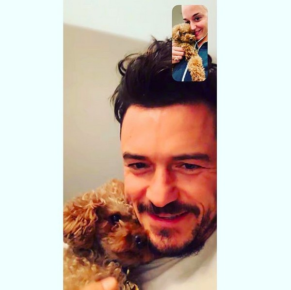 Katy Perry e Orlando Bloom conversando por vídeo e com seus cachorrinhos no colo (Foto: Instagram)