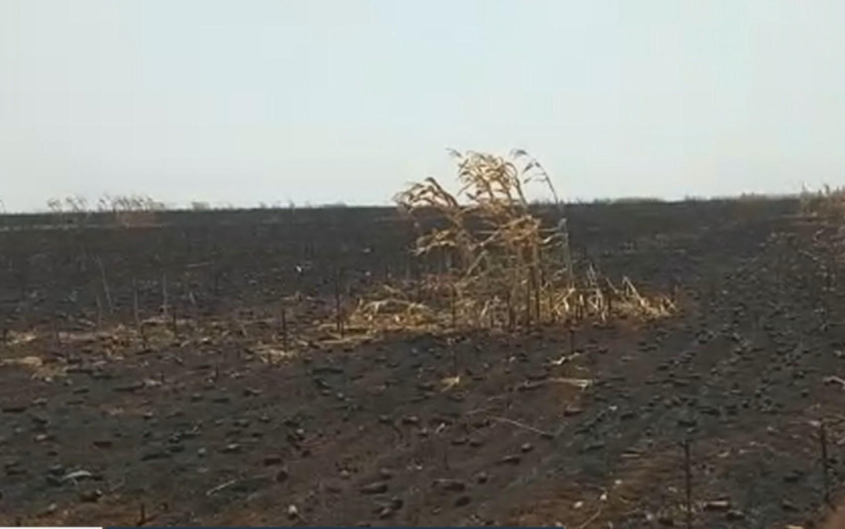Agricultor relata prejuízo de cerca de R$ 1,5 milhão após incêndio destruir lavoura na Chapada dos Veadeiros; vídeo