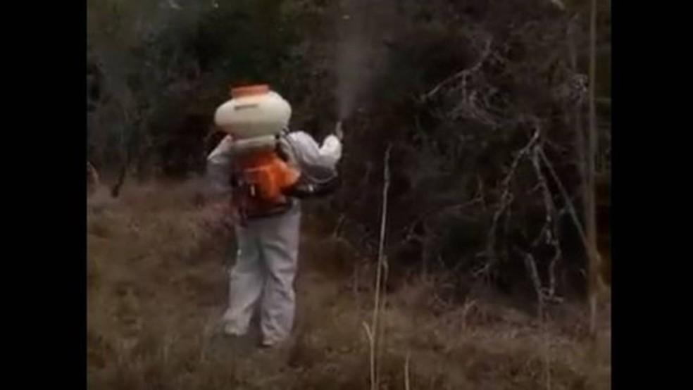 Na Argentina, agrotóxicos foram aplicados por meio terrestre e aéreo para tentar conter nuvem de gafanhotos — Foto: Reprodução