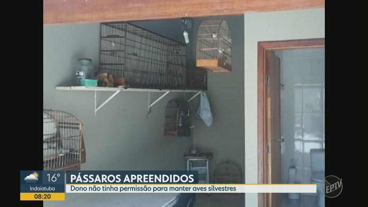 Polícia Militar Ambiental apreende nove aves silvestres em Campinas