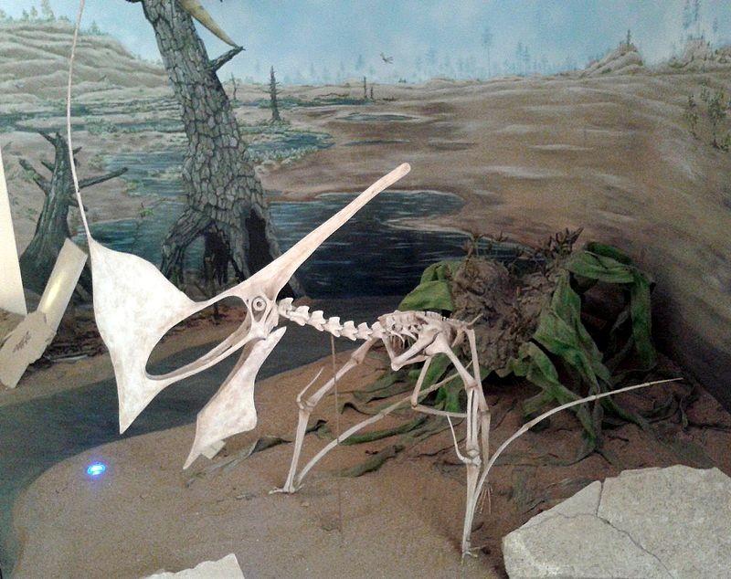 Fóssil de pterossauro (Foto: Wikimedia Commons)