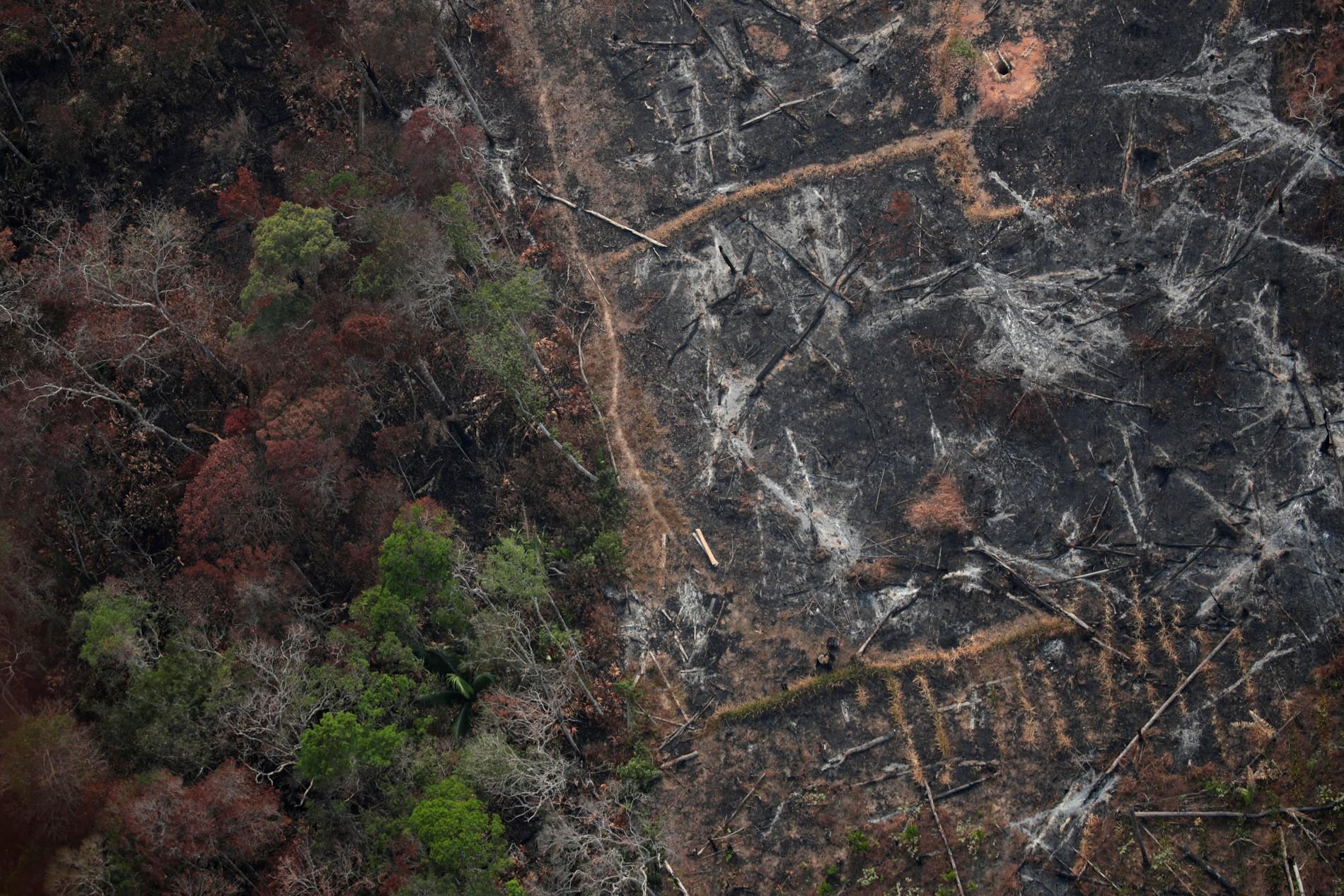 Pará concentra quase metade de todo o desmatamento da Amazônia no último, mostra Inpe