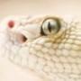 Papel de Parede: Rattlesnake