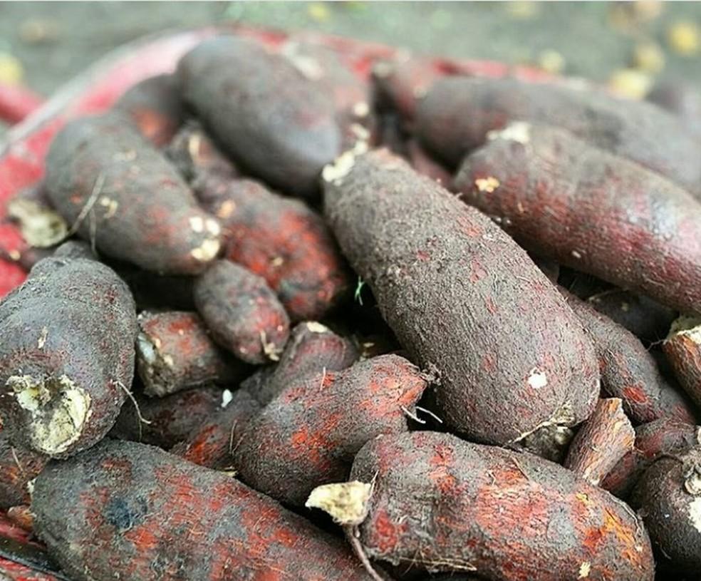 A mandiocaba é rica em glicose e sacarose — Foto: Arquivo pessoal/Leo Modesto