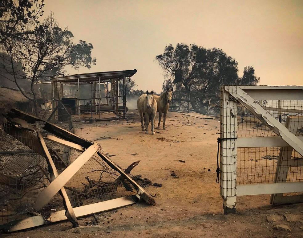 Animais resgatados após incêndio na Califórnia. — Foto: Divulgação/ Facebook