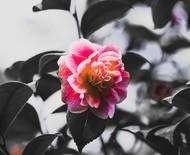 Os principais cuidados com as flores nas épocas mais frias do ano