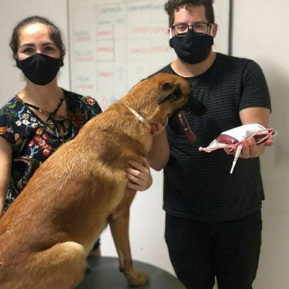 Uma equipe veterinária retirou sangue da cadela na sede do Núcleo de Operações com Cães — Foto: Divulgação/PCCE