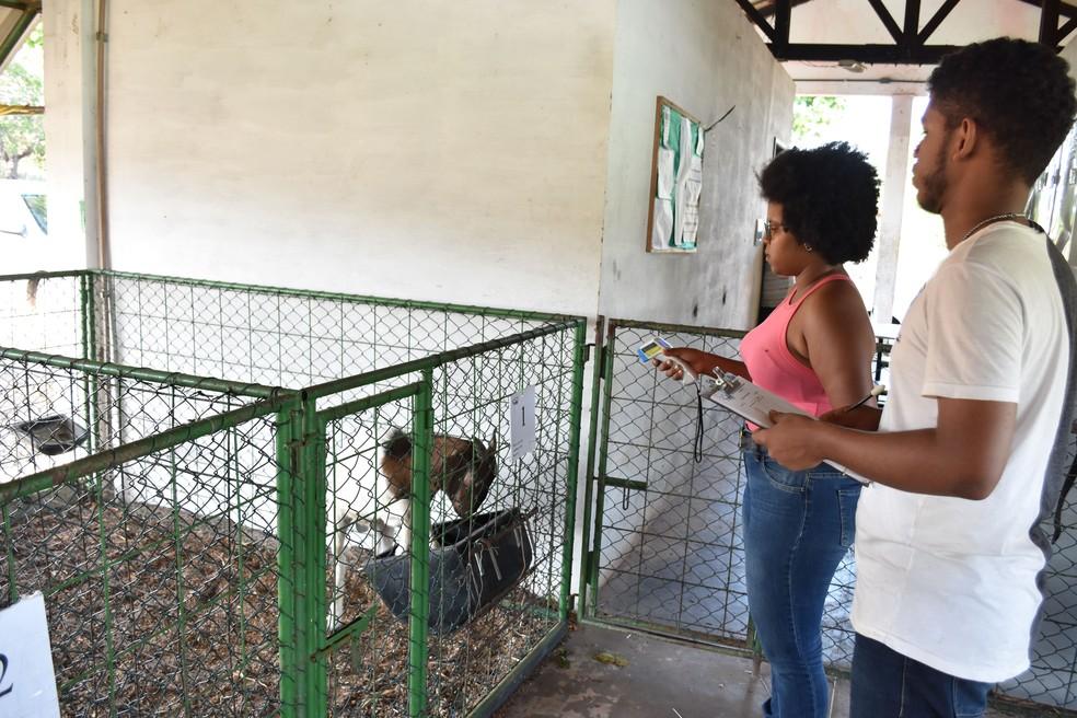 Professores e estudantes do IFMA participam de pesquisa que busca inserir o babaçu na dieta de caprinos no Maranhão — Foto: Divulgação/IFMA