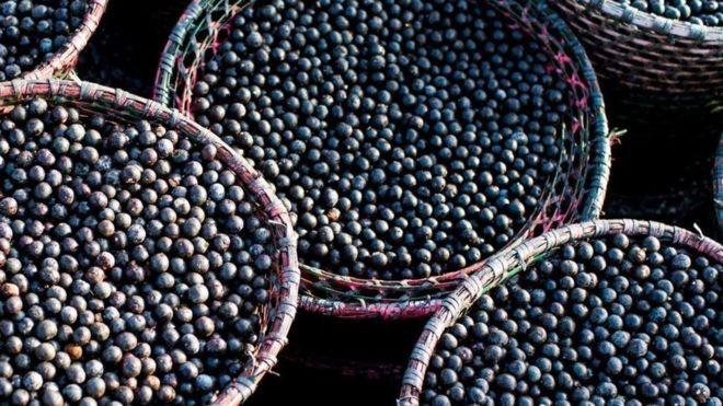 O Brasil é responsável por 85% da produção mundial de açaí, mais de 1,25 milhão de toneladas por ano (Foto: ALAMY via BBC)